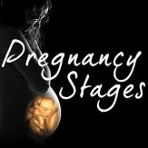 Pregnancy Stages Giveaway