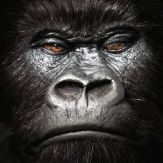 Kong Giveaway