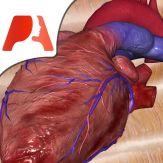 Pocket Heart Giveaway