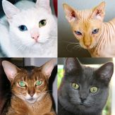 Cats: Photo-Quiz about Kittens Giveaway